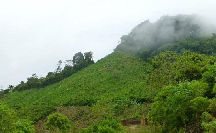 Image of jungle mountain