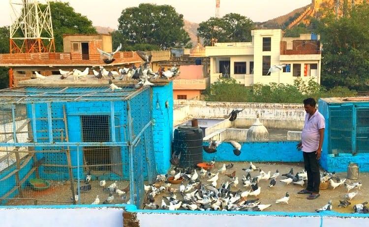 Pigeon fancier in Jaipur, Rajasthan