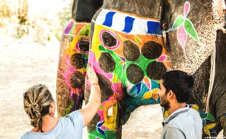Elephant Sanctuary in Jaipur