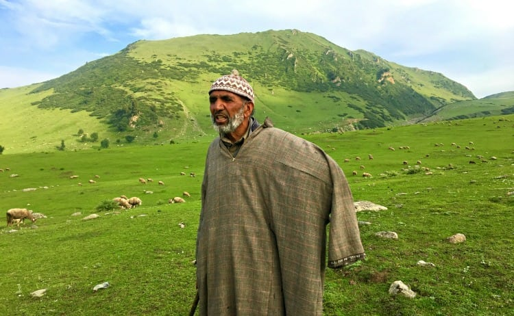 Image of Kashmiri shepherd in the green meadow
