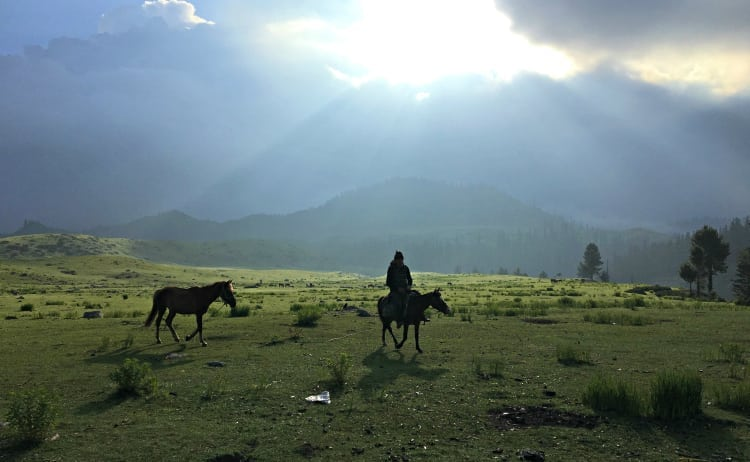 Image of horses in Kashmir