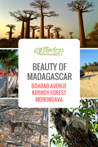 Discover the beauty of Madagascar in Boabab Avenue, Kirindy Forest and Morondava. Travel blog by Wanders Miles.
