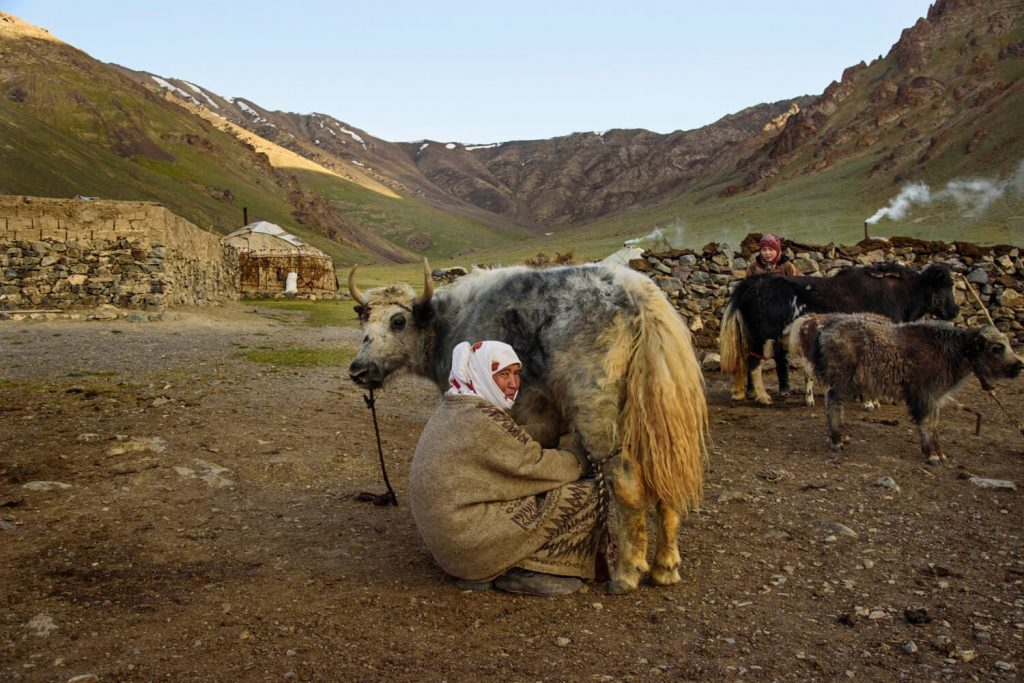 Joan Torres, Against the Compass, with Krygystan nomads milking a yak