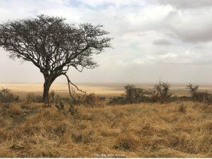 Serengetti safari in Tanzania by This Big Wild World
