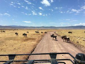 Wildebeest on Serengetti safari, Tanzania by This Big Wild World