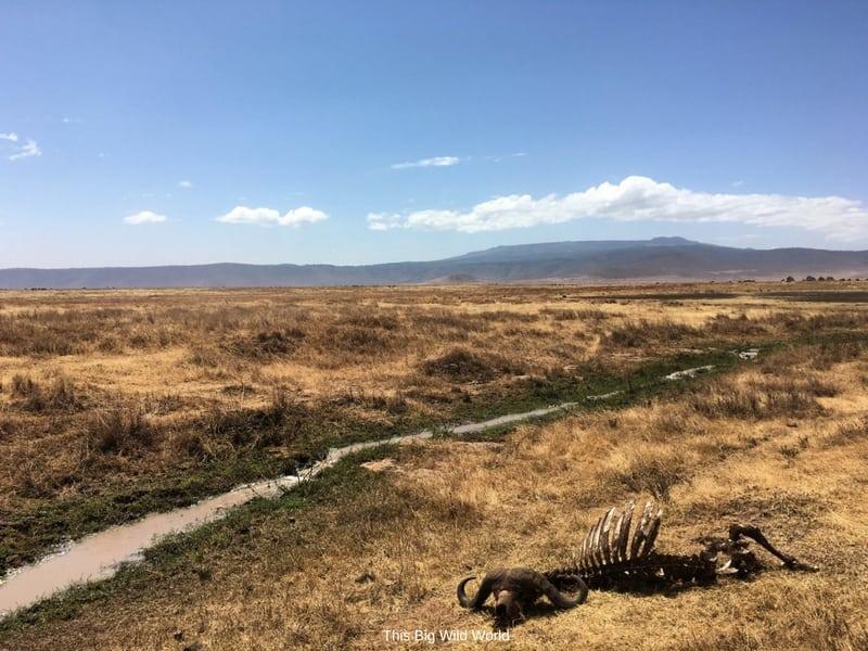 Animal carcass in Serengetti, Tanzania by This Big Wild World