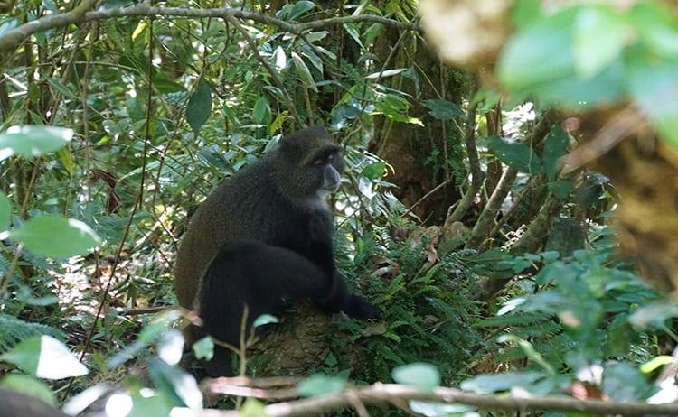 Day 5 on the Kilimanjaro trek. Blue Monkey by Marangu Gate.