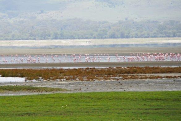 Pink flamingos at Ngorongoro Crater, Tanzania