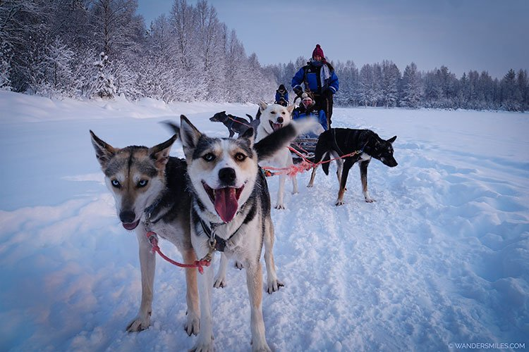 Husky sledding in the snow in Rovaniemi, Finland