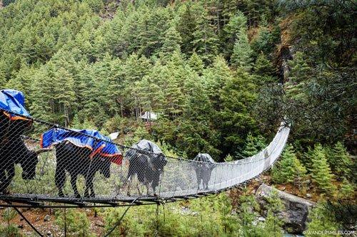 Yaks crossing a suspension bridge near Jorsalle on Everest Base Camp Trail