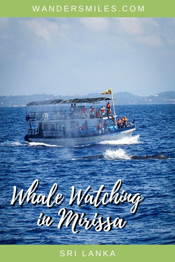 Guide to responsible whale watching in Mirissa, Sri Lanka
