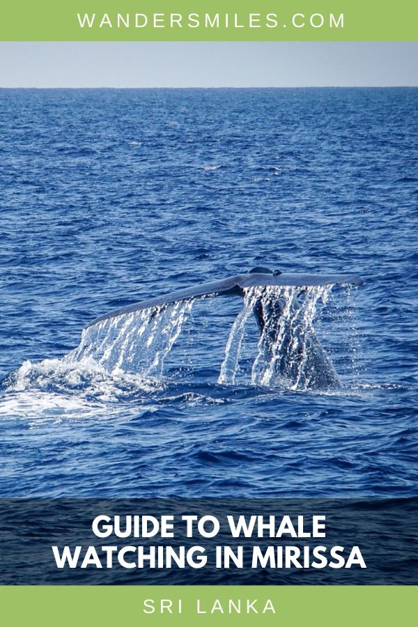 Tips on how to go whale watching in Mirissa – when to visit, where to stay and how to spot the whales