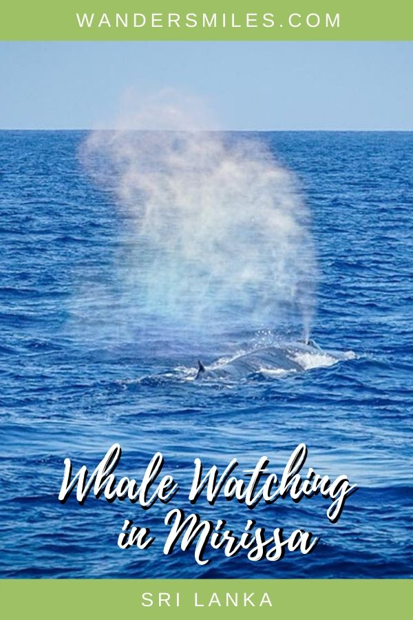 Catch the whales spouting through their blowholes - all you need to know about whale watching in Mirissa