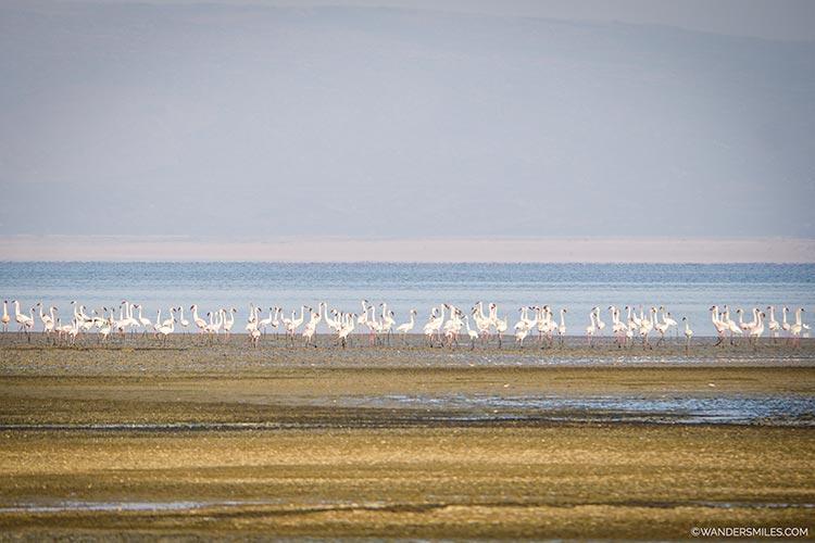 Flamingos at Lake Abbe, Djibouti