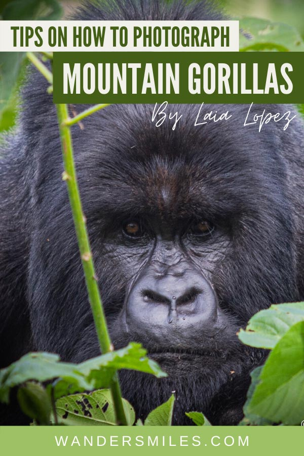 Tips and advice on how to photograph mountain gorillas in the Congo
