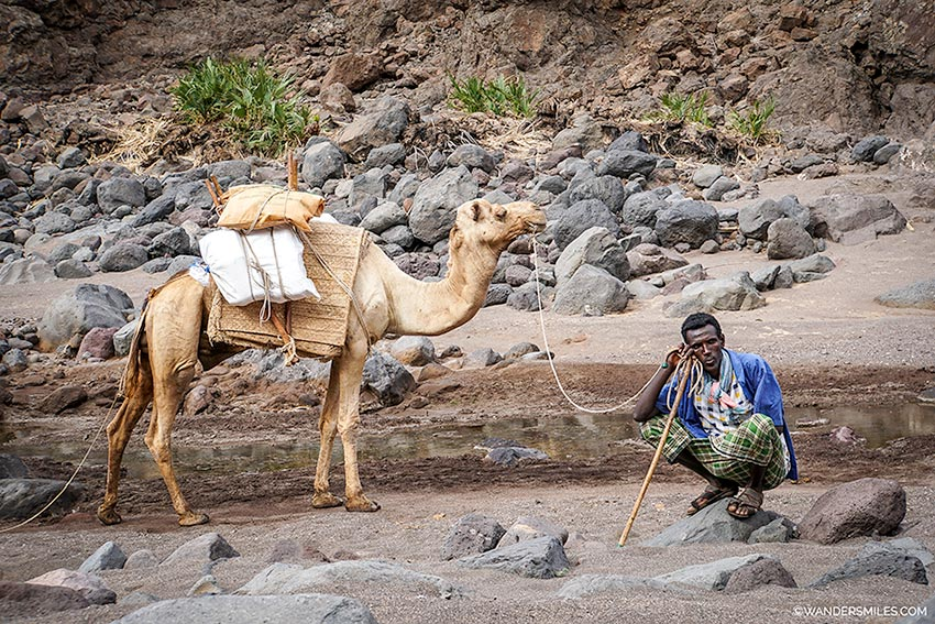 Camel as we trekked from Wadi Abbe Bad to Lake Assal in Djibouti