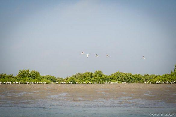 Bird watching in the Hara Mangroves in Qeshm, Iran