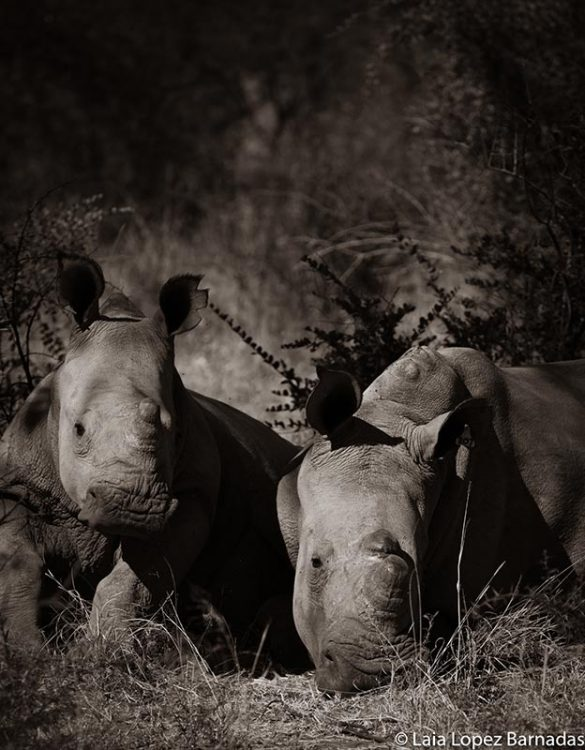 How to Photograph Mountain Gorillas in the Congo | Laia Lopez