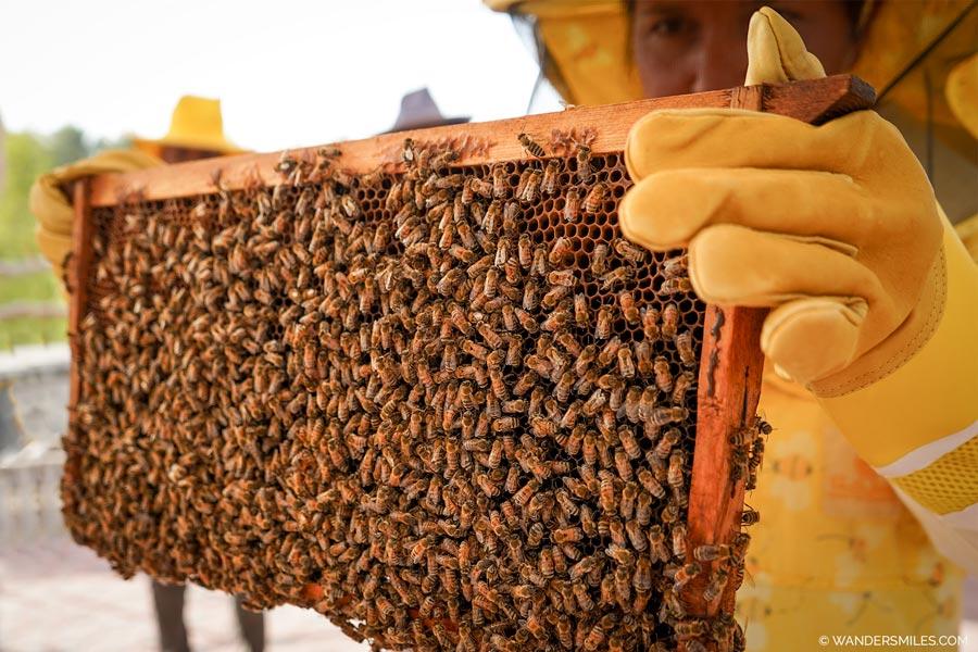 Visit Hatta Bee Farm, United Arab Emirates