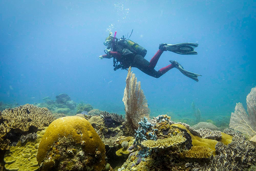Diving in Nosy Be, Madagascar