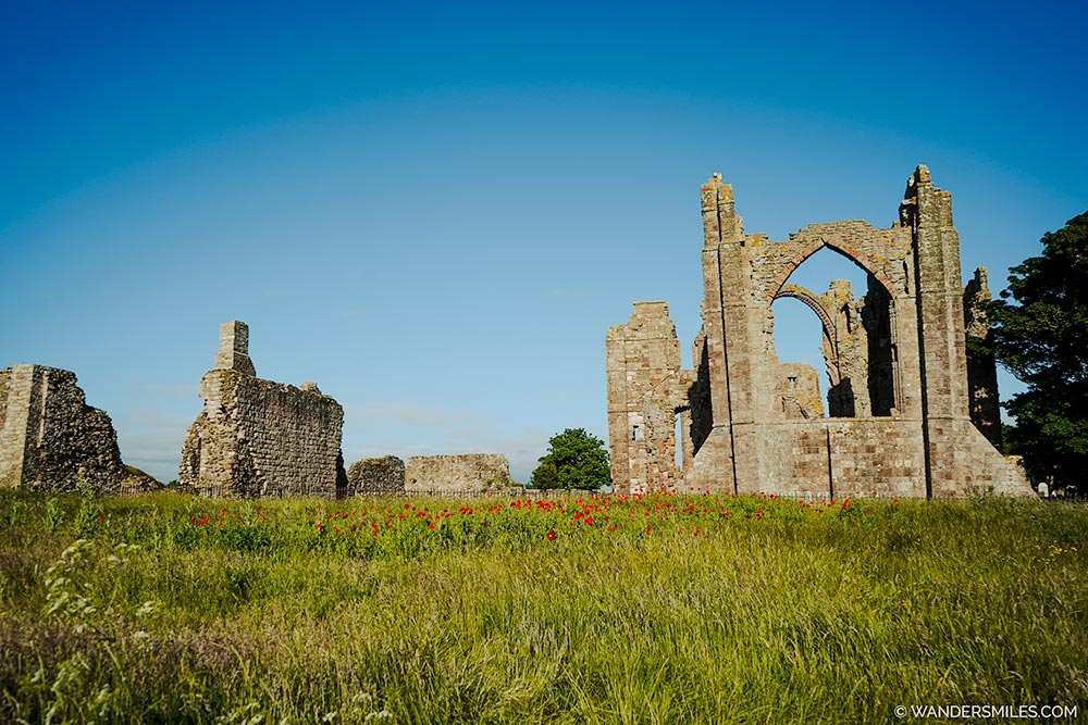 Poppies in front of Lindisfarne Priory on Holy Island