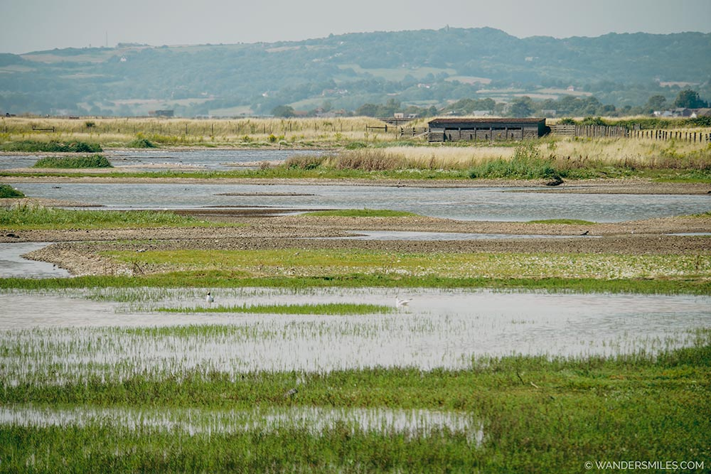 Birdwatching at Rye Nature Reserve