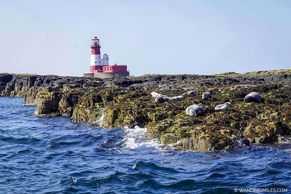 Seals by Longstone Lighthouse in the Farne Islands, Northumberland