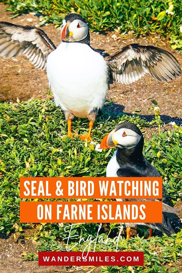 Puffins and Bird watching on Farne Islands