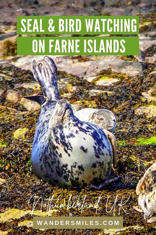 Seal and Bird watching on Farne Islands