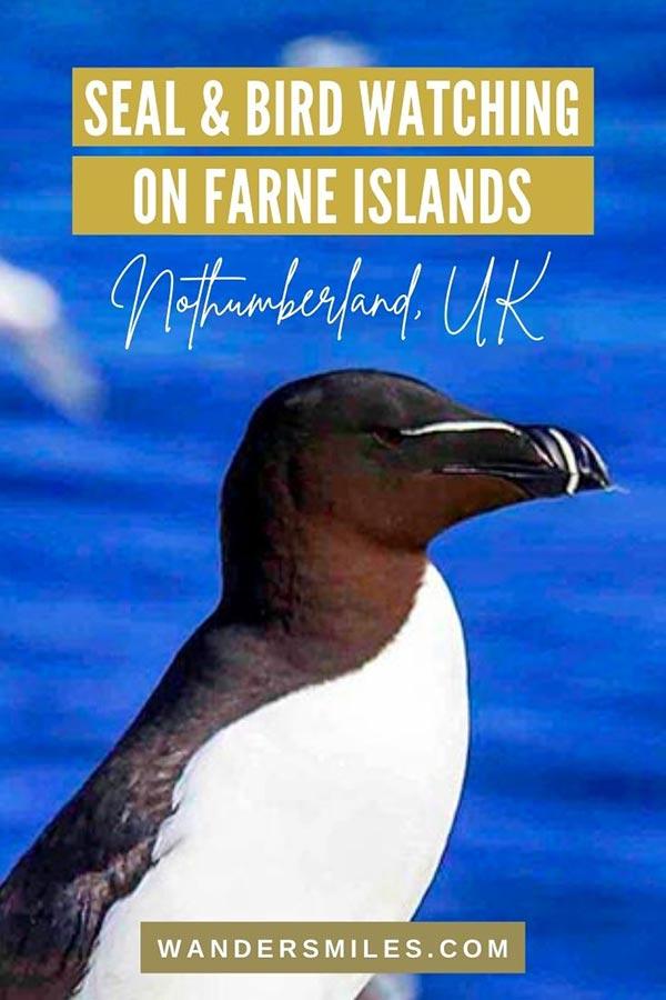 Amazing bird watching. on Farne Islands
