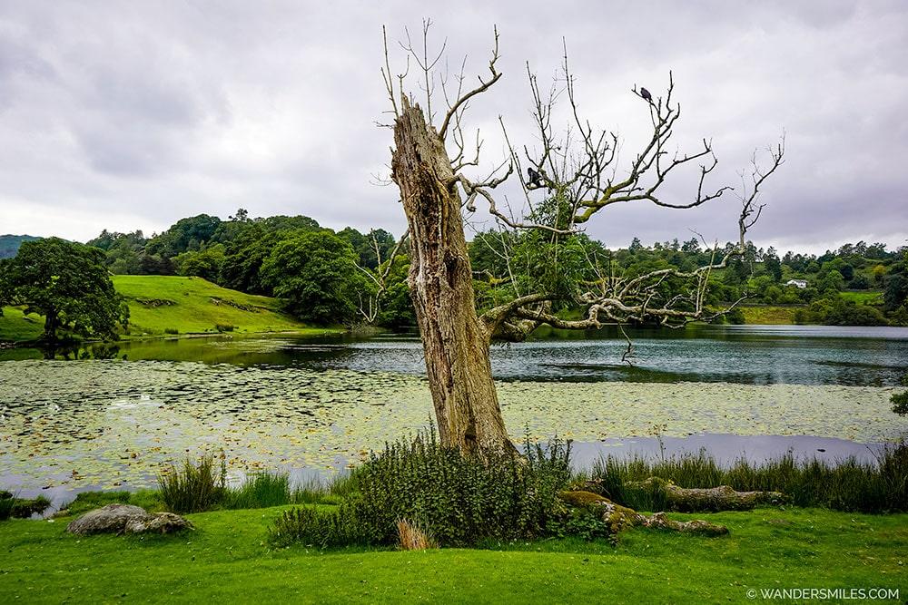 Tree by Loughrigg Tarn